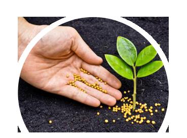 Ever green for Concepto de plantas ornamentales