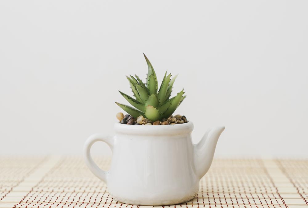 La planta de interior: cultivo y cuidados